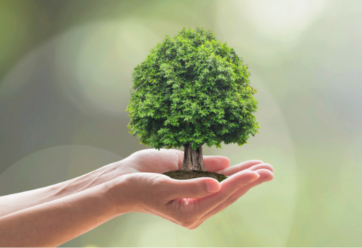 PN-EN ISO 14001:2015 System Zarządzania Środowiskowego